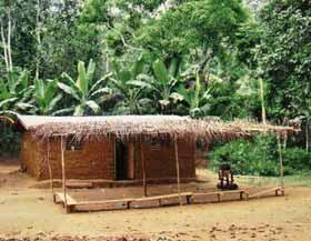 Campement Pygmée Bagyeli